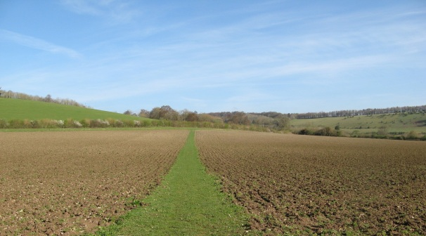 Turville footpath unploughed
